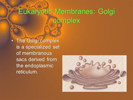 Eukaryotic Membranes: Golgi complex The Golgi complex is a specialized set of membranous sacs derived from the endoplasmic reticulum.