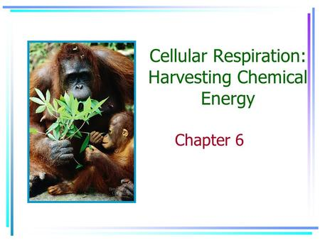 Cellular Respiration: Harvesting Chemical Energy Chapter 6.