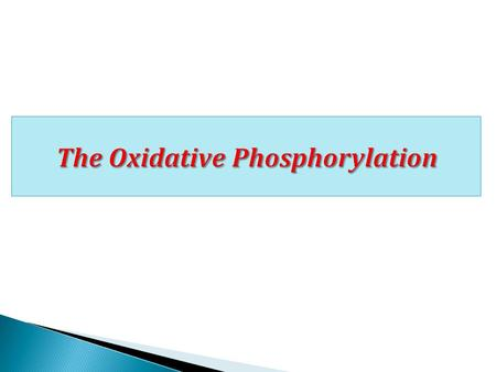 The Oxidative Phosphorylation.  ATP as energy currency  Mitochondria and the electron transport chain organization  Inhibitors of the electron transport.