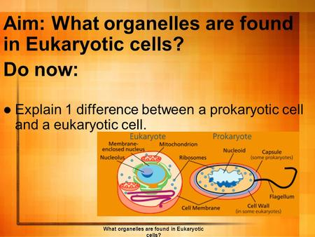 Aim: What organelles are found in Eukaryotic cells?