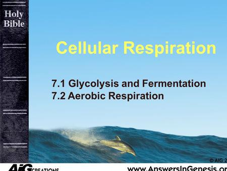 Cellular Respiration 7.1 Glycolysis and Fermentation 7.2 Aerobic Respiration.