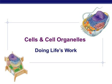 Cells & Cell Organelles Doing Life's Work bacteria cells Types of cells animal cells plant cells Prokaryote - no organelles Eukaryotes - organelles.