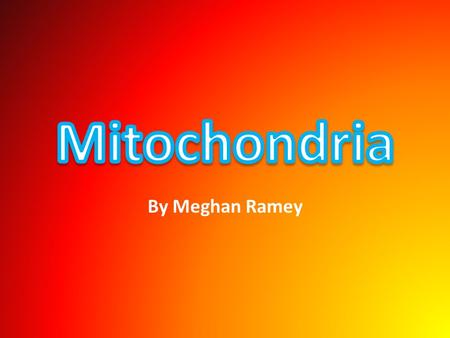 By Meghan Ramey. The Mitochondria produces energy. The folds inside the organelle, the cristae is where sugar, and oxygen are combined creating energy.