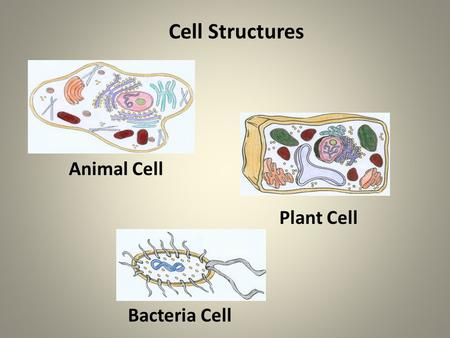 Animal Cell Plant Cell Bacteria Cell Cell Structures.