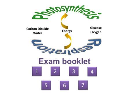 Exam booklet 1 1 2 2 3 3 4 4 5 5 6 6 7 7. glycolysis Calvin cycle/ light-independent stage Krebs cycle.