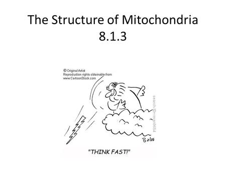 The Structure of Mitochondria 8.1.3. The Structure of Mitochondria Matrix – internal cytosol that contains enzymes for link reaction and Krebs Cristae.