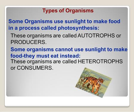 These organisms are called AUTOTROPHS or PRODUCERS. These organisms are called HETEROTROPHS or CONSUMERS. Some Organisms use sunlight to make food in a.