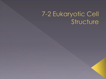 7-2 Eukaryotic Cell Structure
