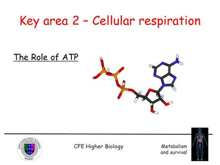 CFE Higher Biology Metabolism and survival Key area 2 – Cellular respiration The Role of ATP.
