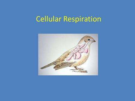 Cellular Respiration. Chemical Energy and Food A Calorie (with a capital C) is the amount of energy required to raise the temperature of 1 gram of water.