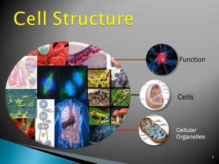 1 Function Cellular Organelles Cells 3 4  A cell is a basic unit of structure and function of life. Cells make up living things and carry out activities.