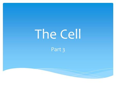 The Cell Part 3.