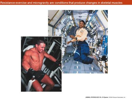 Resistance exercise and microgravity are conditions that produce changes in skeletal muscles.