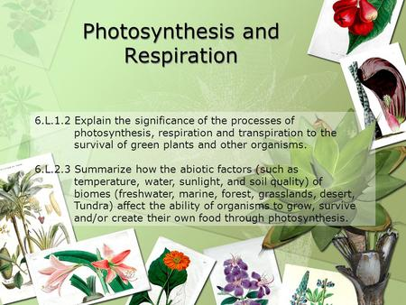 Photosynthesis and Respiration 6.L.1.2 Explain the significance of the processes of photosynthesis, respiration and transpiration to the survival of green.
