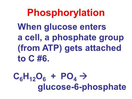 When glucose enters a cell, a phosphate group (from ATP) gets attached to C #6. Phosphorylation C 6 H 12 O 6 + PO 4  glucose-6-phosphate.
