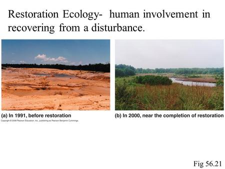 Fig 56.21 Restoration Ecology- human involvement in recovering from a disturbance.