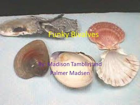 Funky Bivalves By: Madison Tamblin and Palmer Madsen.