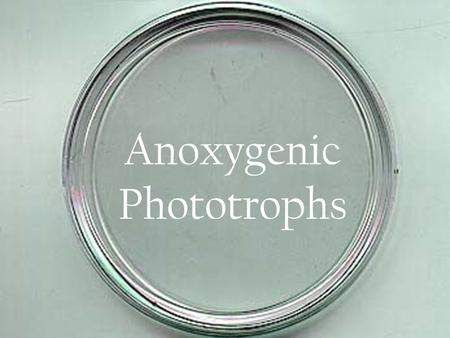 Anoxygenic Phototrophs. What are they?  Photosynthetic bacteria which use a reducing agent and light energy to build organic material, but do not produce.
