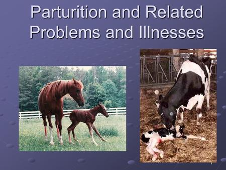 1 Parturition and Related Problems and Illnesses.
