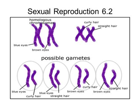 Sexual Reproduction 6.2.