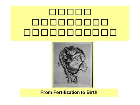 Human Embryonic Development From Fertilization to Birth.