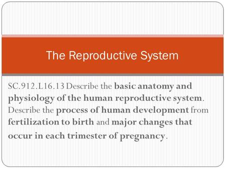SC.912.L16.13 Describe the basic anatomy and physiology of the human reproductive system. Describe the process of human development from fertilization.
