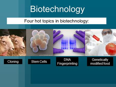 Biotechnology Cloning Genetically modified food Four hot topics in biotechnology: Stem Cells DNA Fingerprinting.