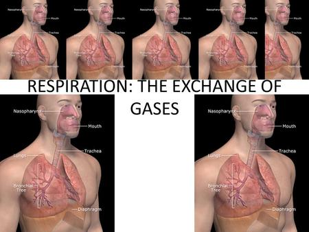 RESPIRATION: THE EXCHANGE OF GASES. OVERVIEW: GAS EXCHANGE INVOLVES BREATHING, THE TRANSPORT OF GASES, AND THE SERVICING OF TISSUE CELLS.