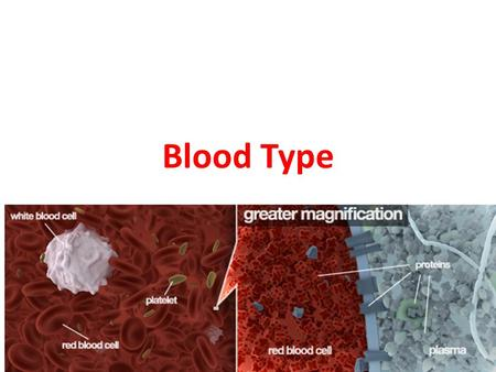 Blood Type. Multiple Alleles Distinct molecules called agglutinogens (a type of antigen) are attached to the surface of red blood cells. There are two.