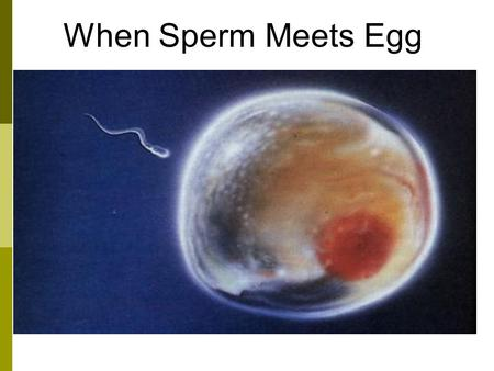 When Sperm Meets Egg. Egg In females, the sex cells are called eggs. Eggs are produced in sex organs called ovaries. Sex cells – egg An egg is so big.