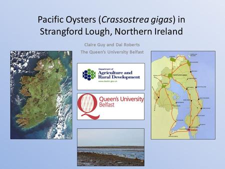 Pacific Oysters (Crassostrea gigas) in Strangford Lough, Northern Ireland Claire Guy and Dai Roberts The Queen's University Belfast.