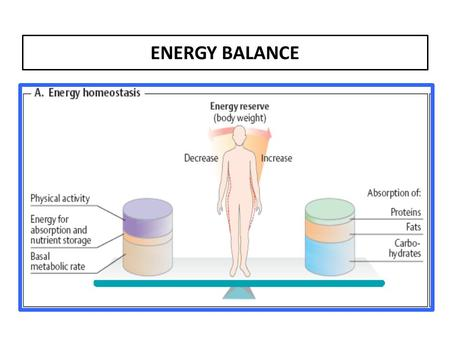ENERGY BALANCE.  BMR is predicted by lean body mass (i.e. total body mass - fat mass), and varies with gender and age.  Extra metabolic energy is consumed.