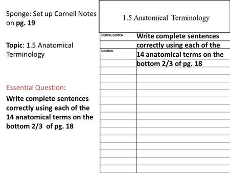 Sponge: Set up Cornell Notes on pg. 19 Topic: 1.5 Anatomical Terminology Essential Question: Write complete sentences correctly using each of the 14 anatomical.