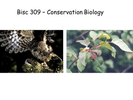 Bisc 309 – Conservation Biology. Bisc 309 – Guests + Assignment Managing Species at Risk Court case: Failure of Dept Fisheries and Oceans to identify.