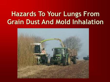 Hazards To Your Lungs From Grain Dust And Mold Inhalation.