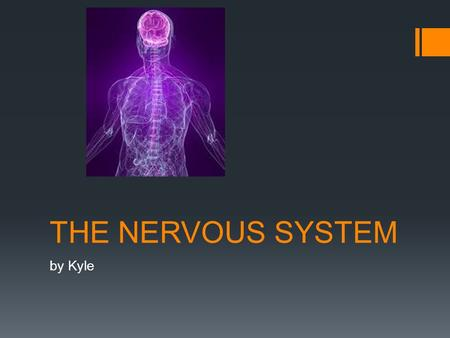 THE NERVOUS SYSTEM by Kyle. The model  The three important thing are the brain, spinal cord and the nerve.