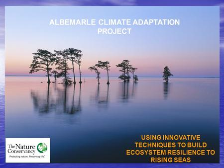 ALBEMARLE CLIMATE ADAPTATION PROJECT USING INNOVATIVE TECHNIQUES TO BUILD ECOSYSTEM RESILIENCE TO RISING SEAS.