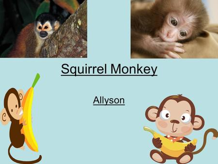 Squirrel Monkey Allyson. Table of Contents Food page 1 Interesting Fact page 2 Description page3 Would this animal make A good pet why or why not page.