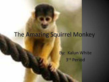 The Amazing Squirrel Monkey By: Kalun White 3 rd Period.