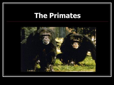 The Primates Key Questions Where do humans fit in the world of living things? What are the characteristics of primates? How are humans like the other.