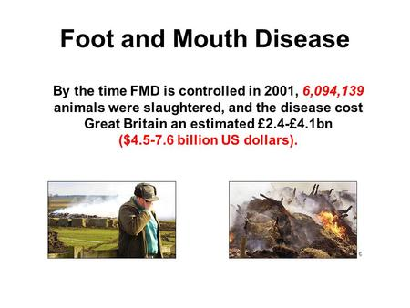 Foot and Mouth Disease By the time FMD is controlled in 2001, 6,094,139 animals were slaughtered, and the disease cost Great Britain an estimated £2.4-£4.1bn.