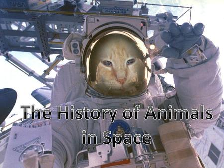 Animals have been used in space science research since the beginning of the space age. Both the United States and Soviet/Russian space programs used animals.