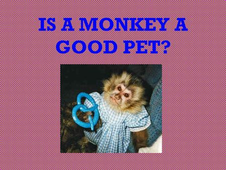 IS A MONKEY A GOOD PET?. Ever think of making a monkey your pet? INTRODUCTION You want to convince your parents that a monkey really would make a good.