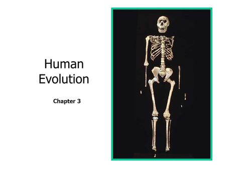 Human Evolution Chapter 3.