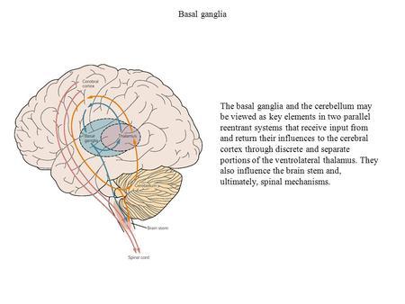principles of neural science pdf download