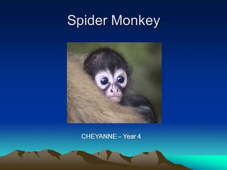 Spider Monkey CHEYANNE – Year 4.