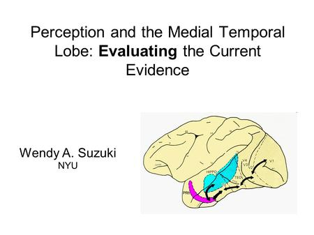 Perception and the Medial Temporal Lobe: Evaluating the Current Evidence Wendy A. Suzuki NYU.