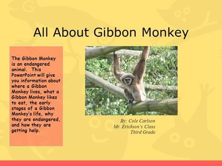 All About Gibbon Monkey By: Cole Carlson Mr. Erickson's Class Third Grade The Gibbon Monkey is an endangered animal. This PowerPoint will give you information.
