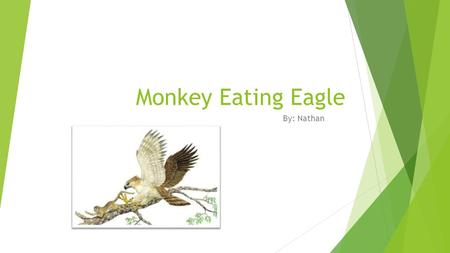 M MONk Monkey Eating Eagle By: Nathan. COLOR  Brown and white.