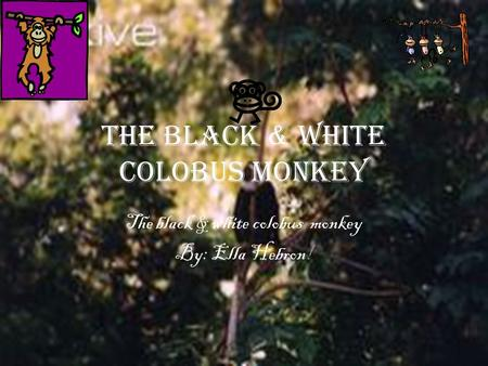 The black & white colobus MONKEY The black & white colobus monkey By: Ella Hebron!